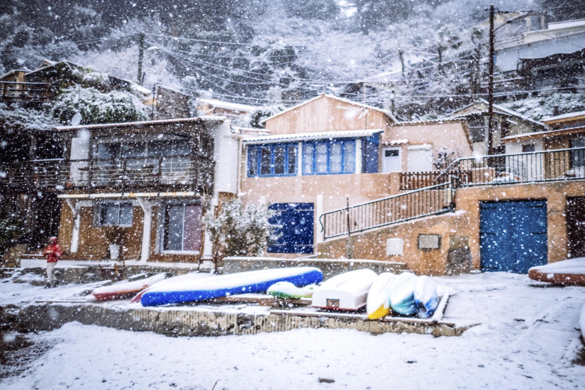 pin. de galle sous la neige - 11