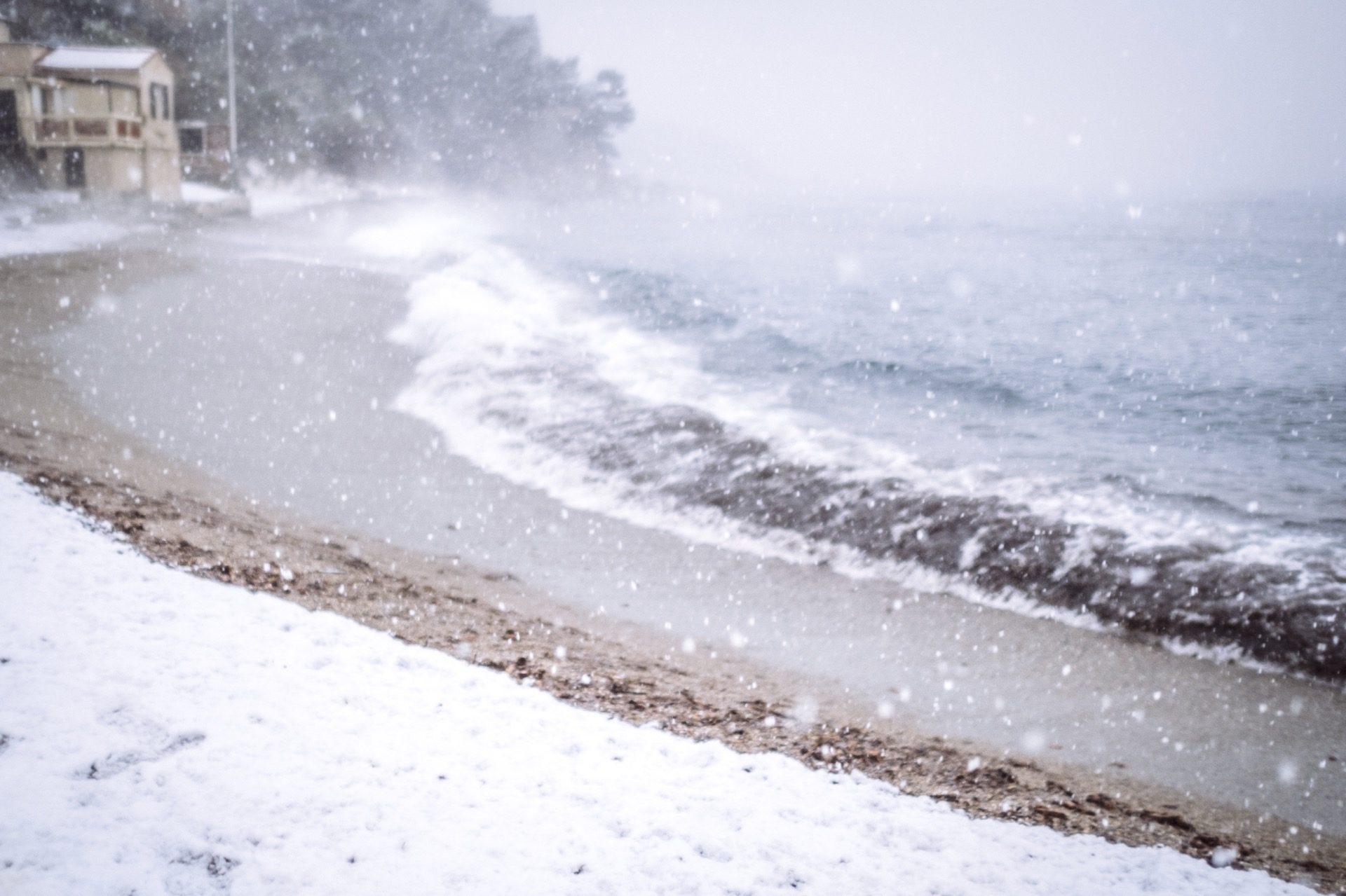 pin. de galle sous la neige - 12