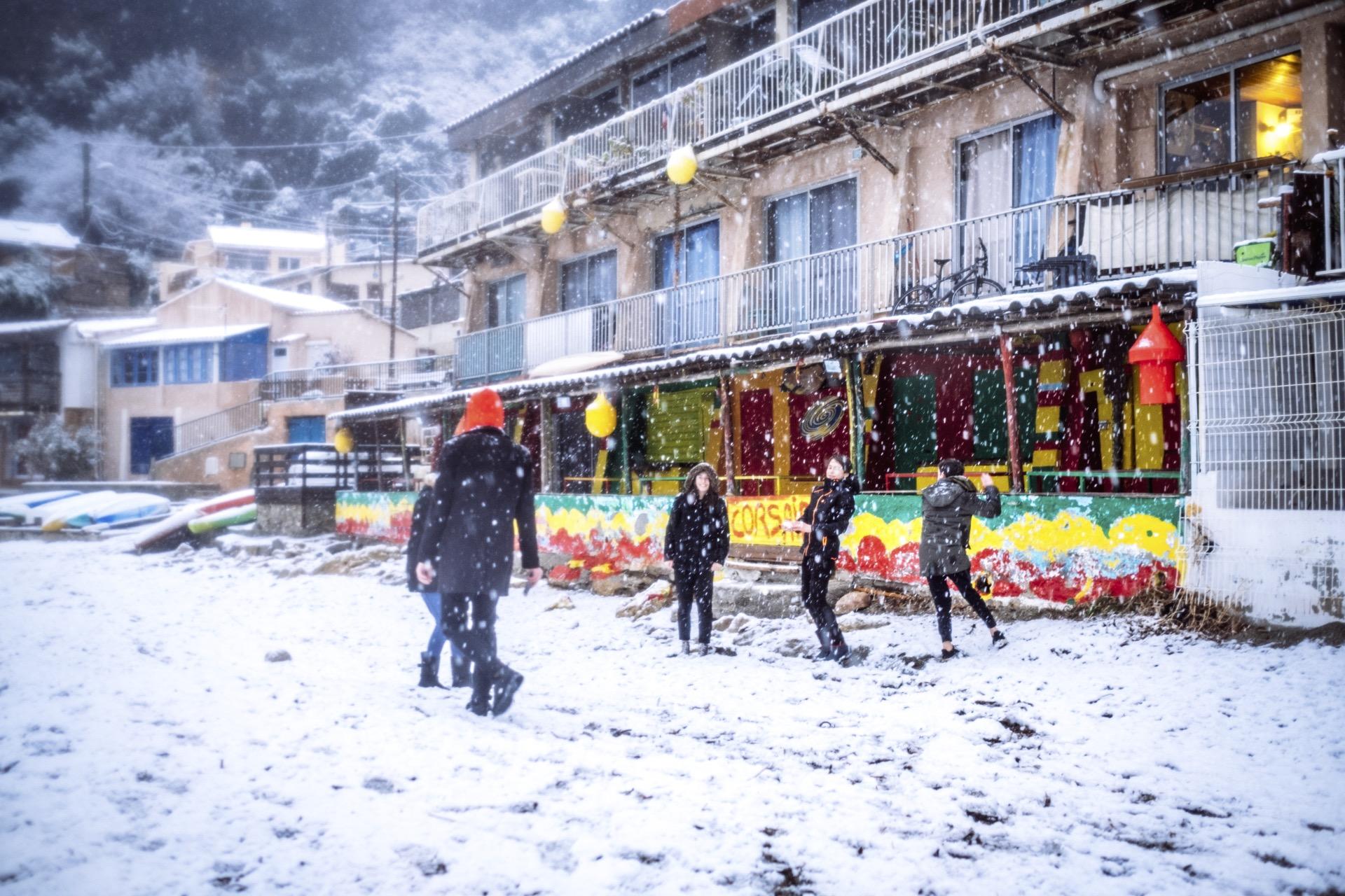 pin. de galle sous la neige - 13
