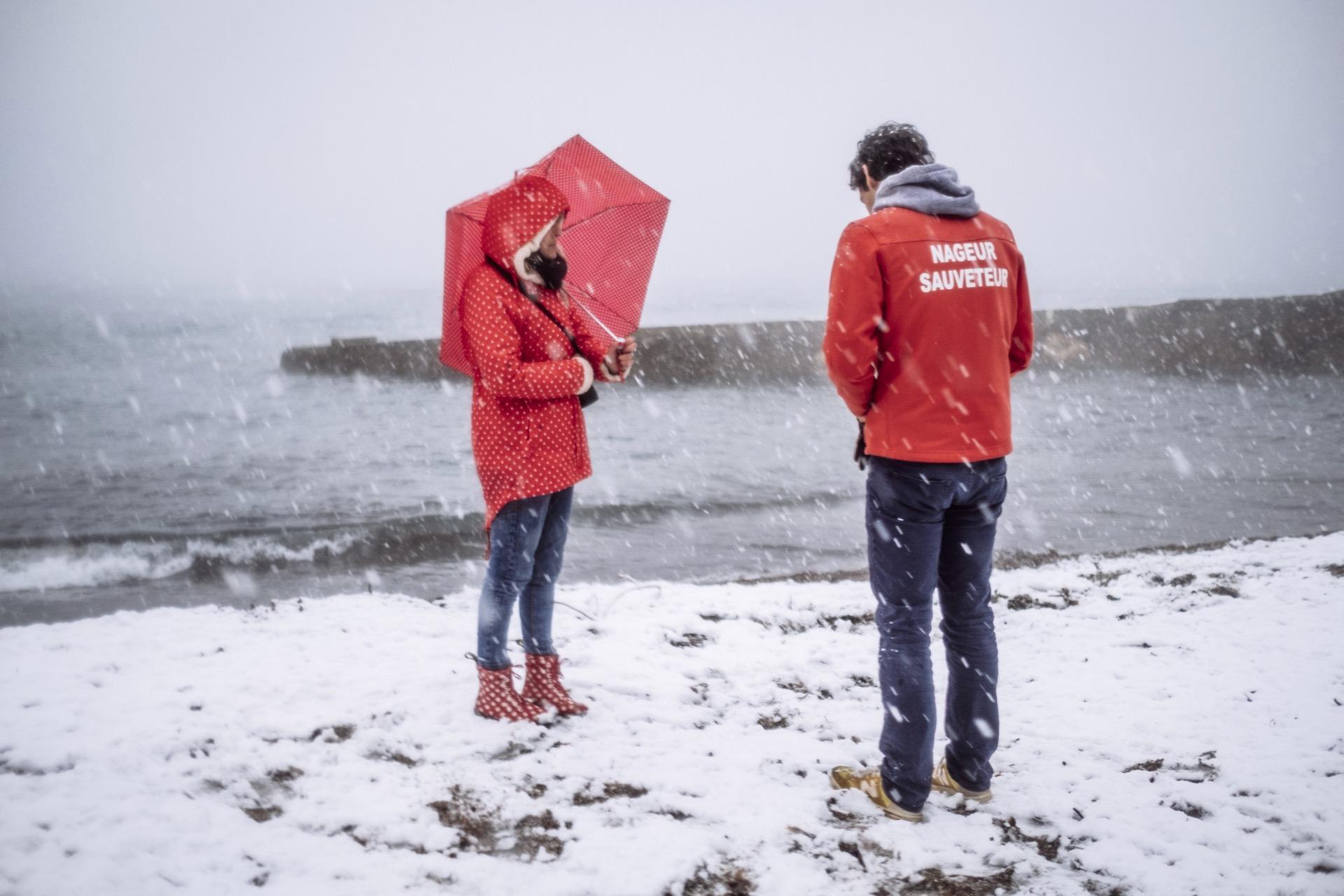 pin. de galle sous la neige - 16