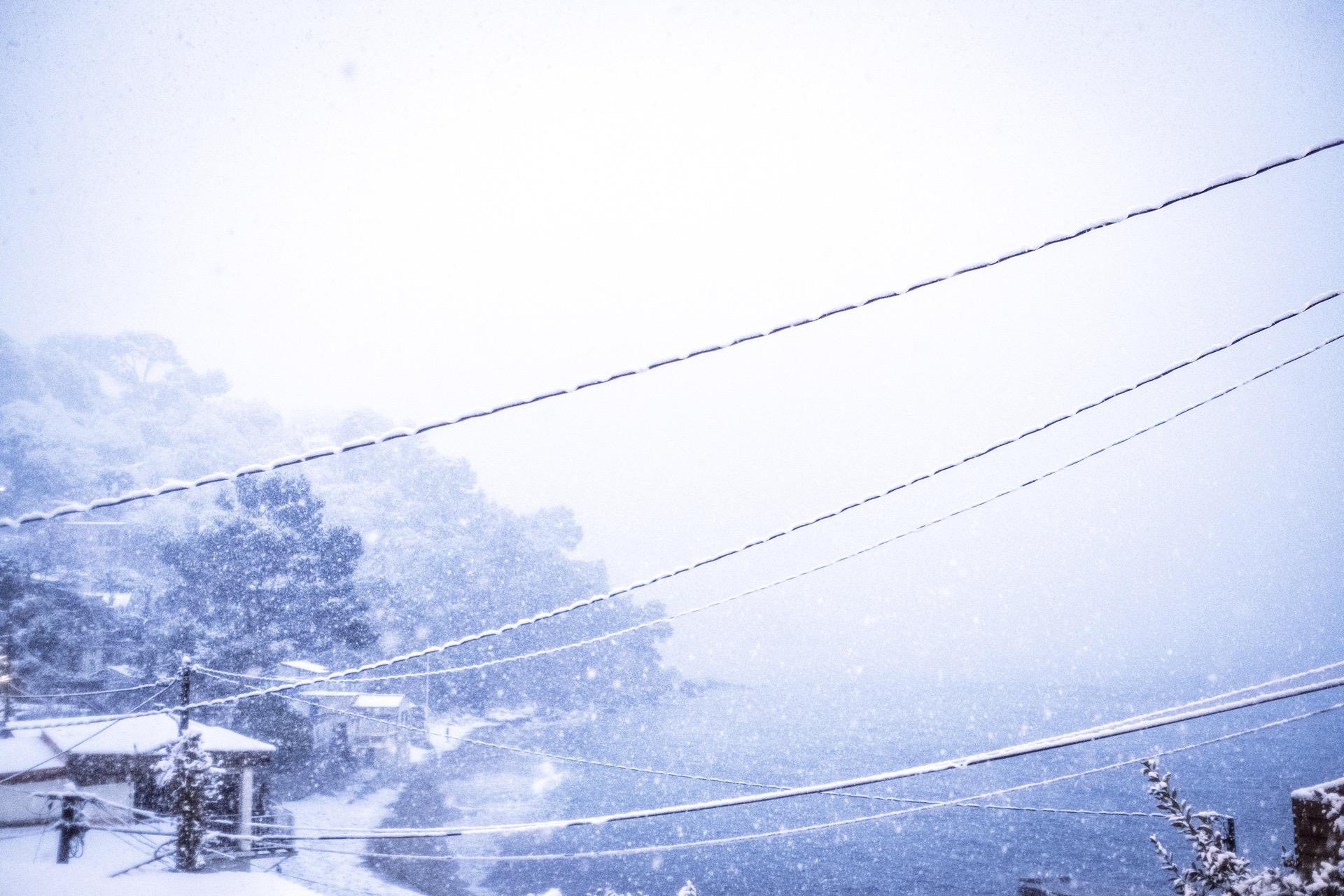 pin. de galle sous la neige - 18