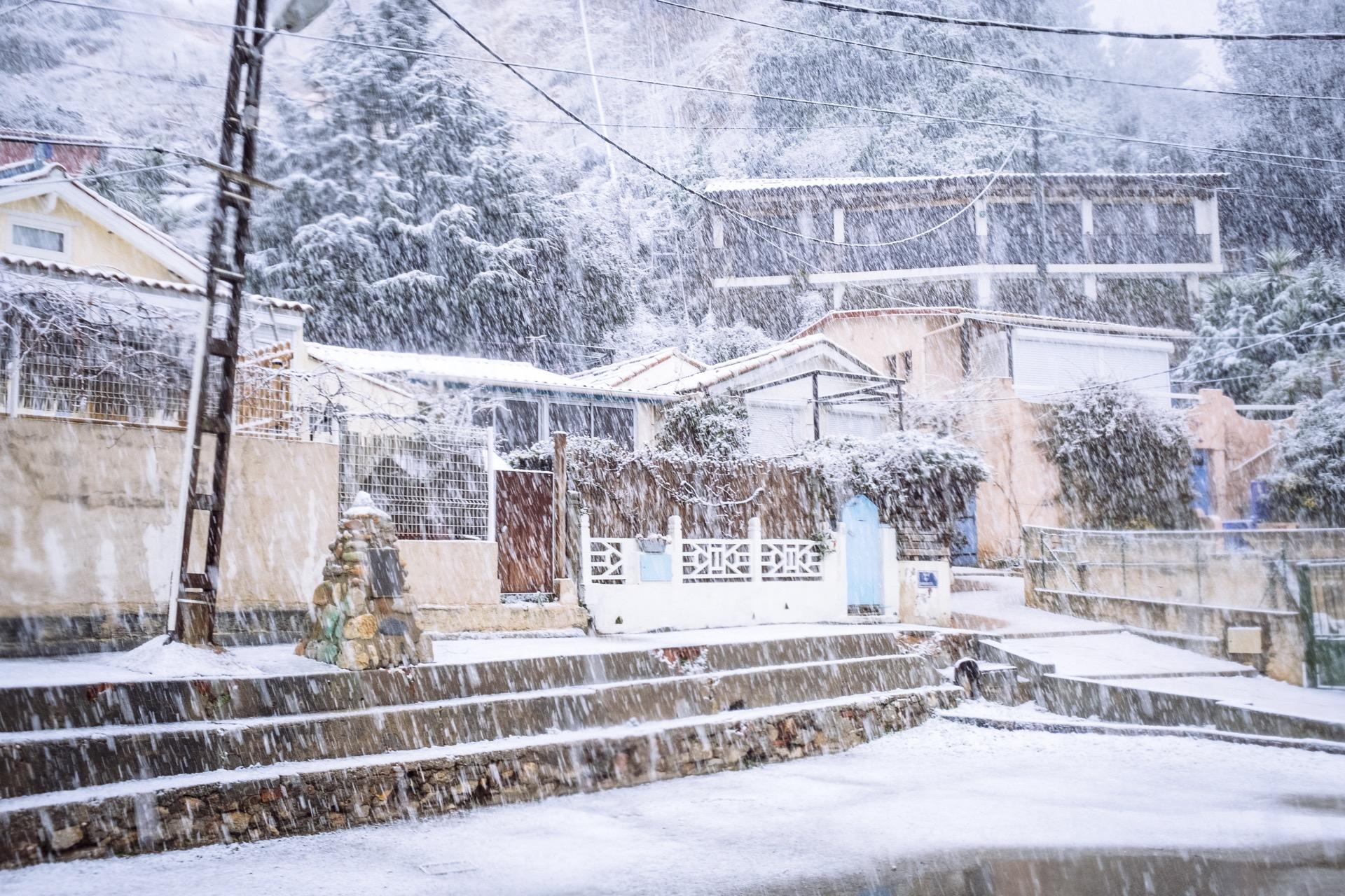 pin. de galle sous la neige - 5