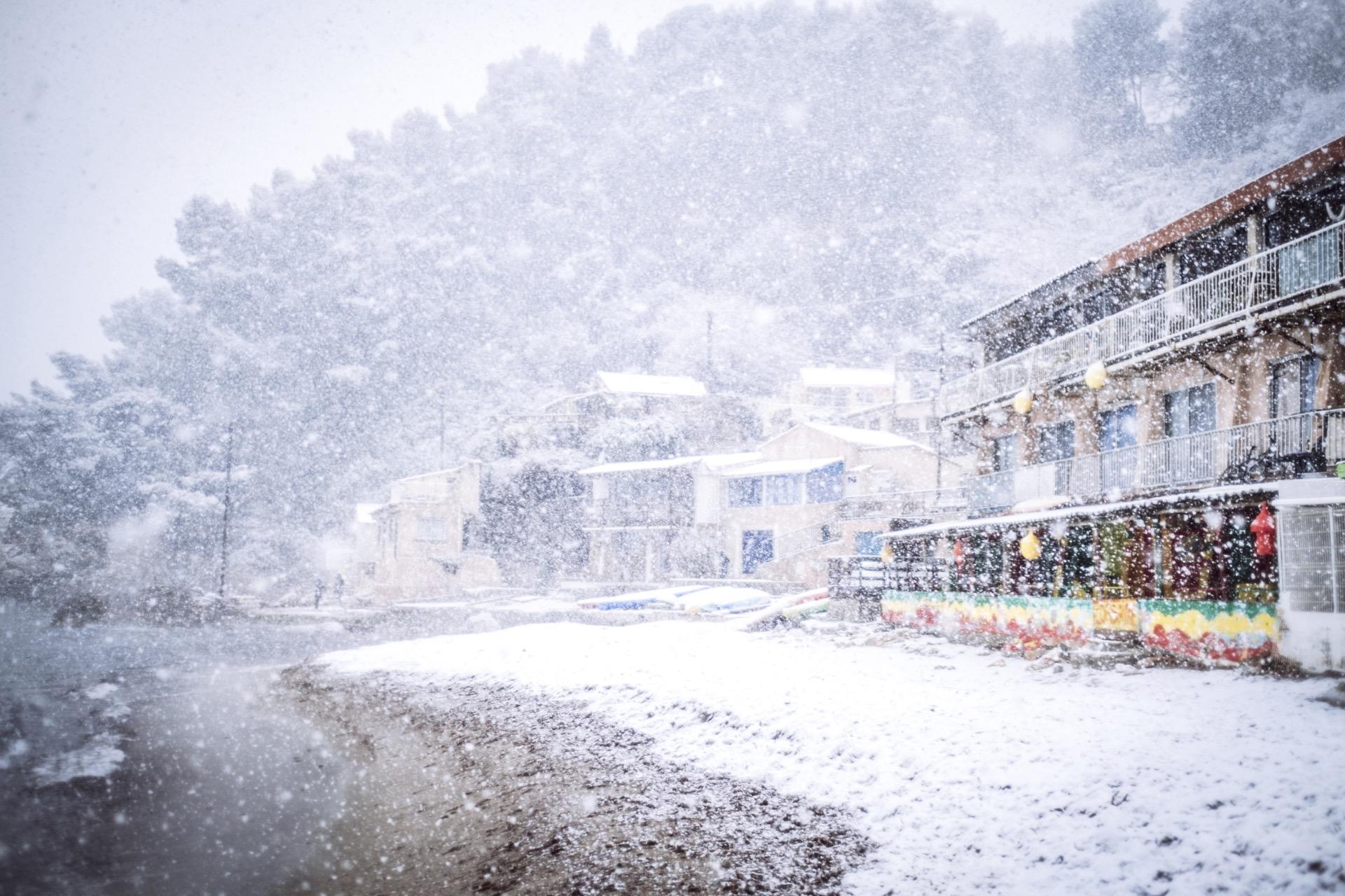 pin. de galle sous la neige - 6