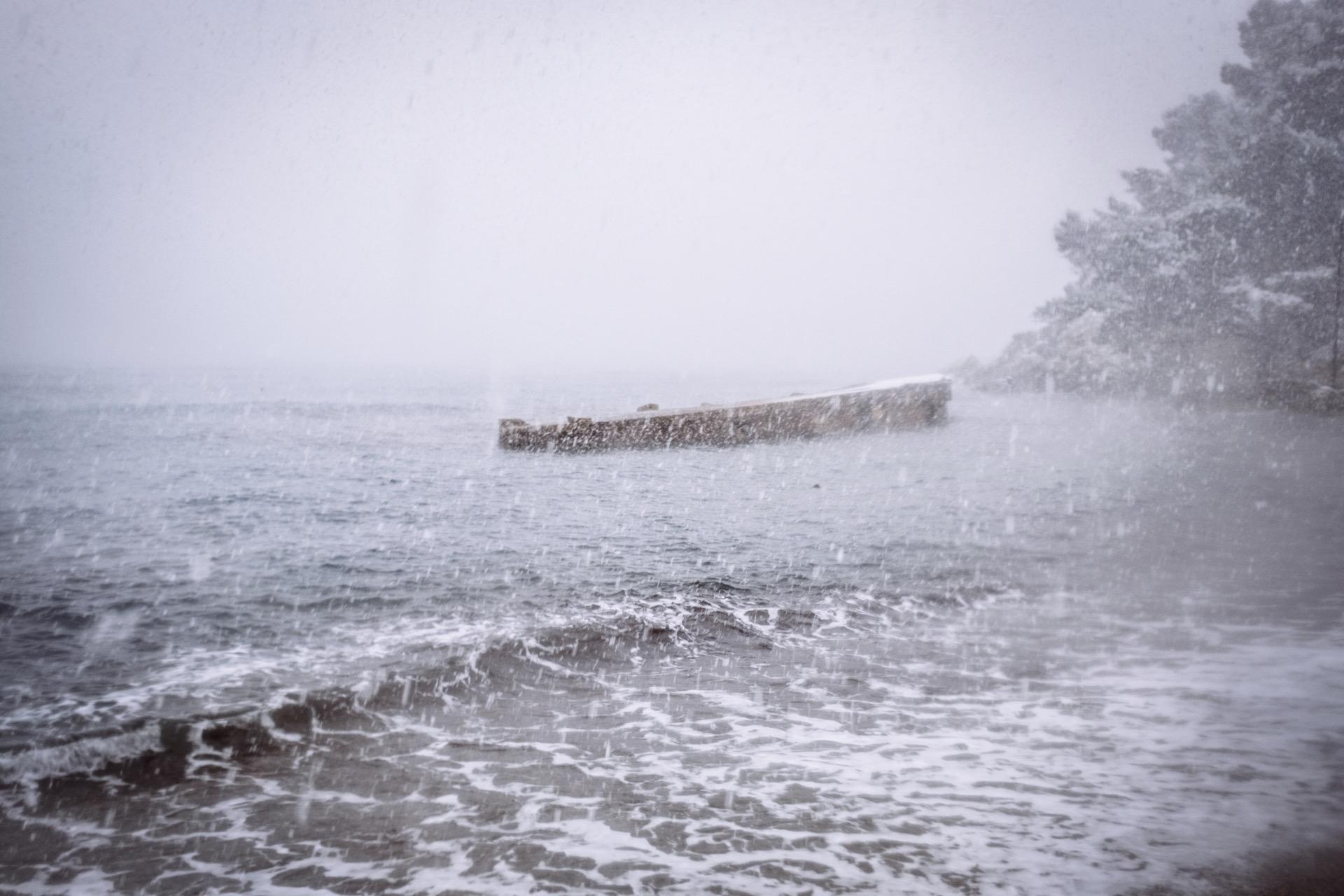 pin. de galle sous la neige - 7