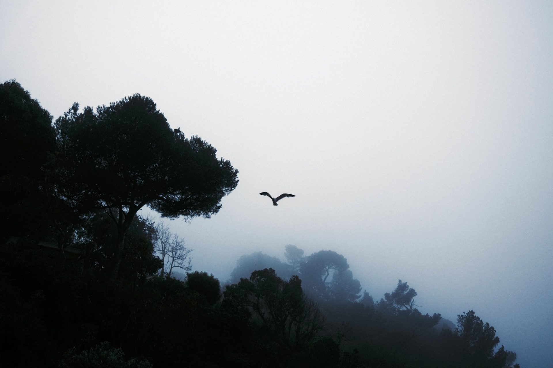 Fuji X100v pin de galle fog @laurentparienti-6