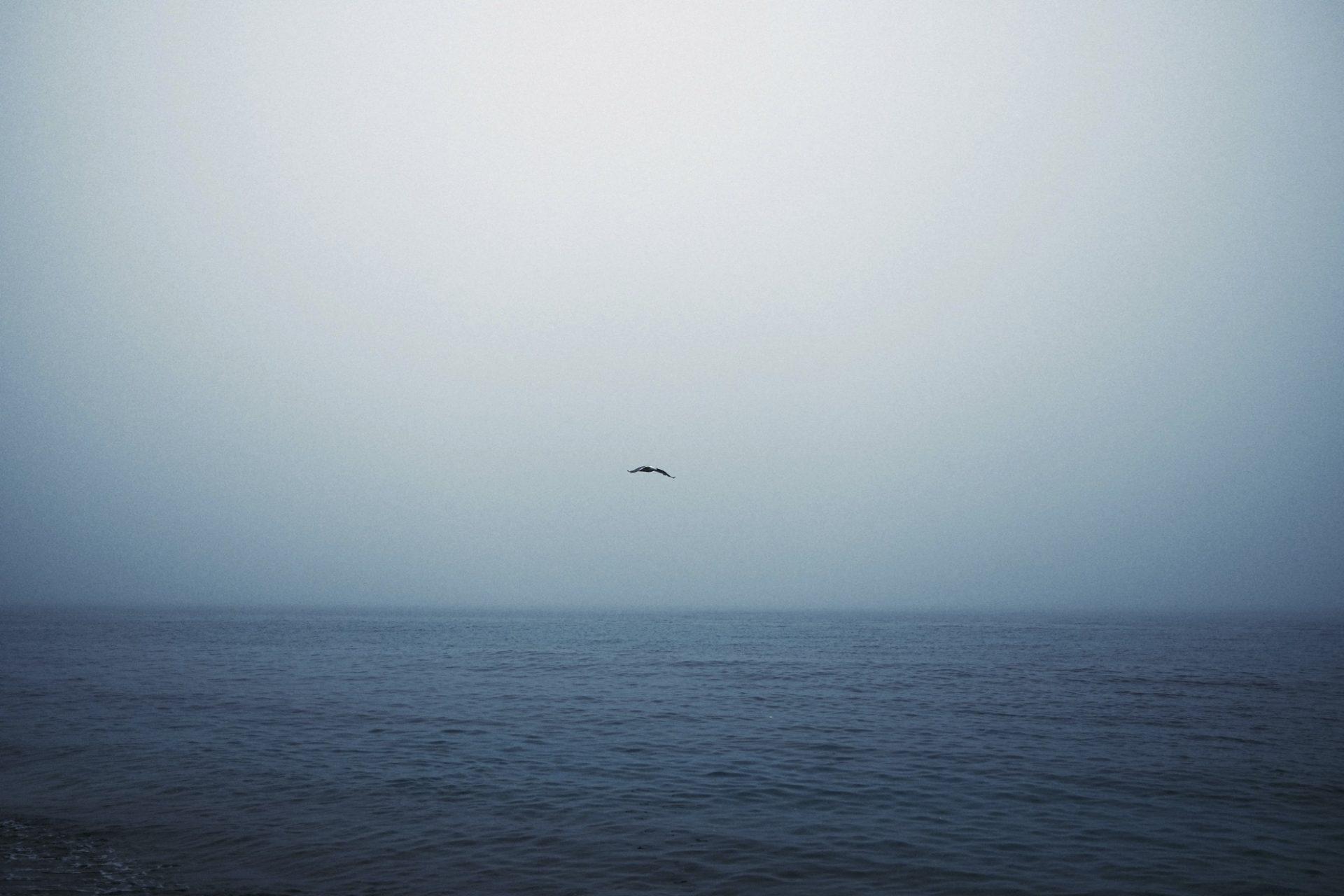 Fuji X100v pin de galle fog @laurentparienti-9