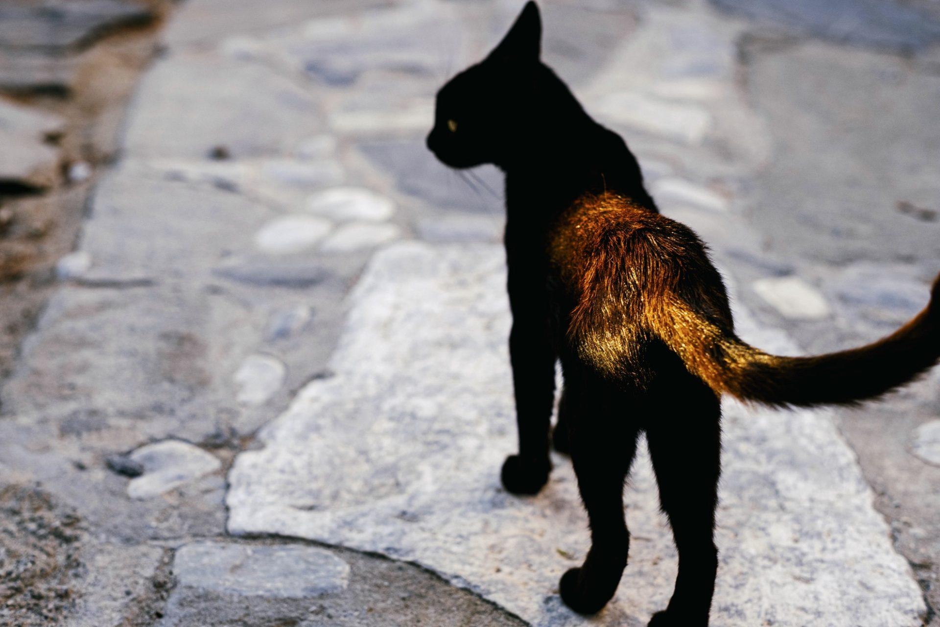 chats grecs@laurentparienti - 10