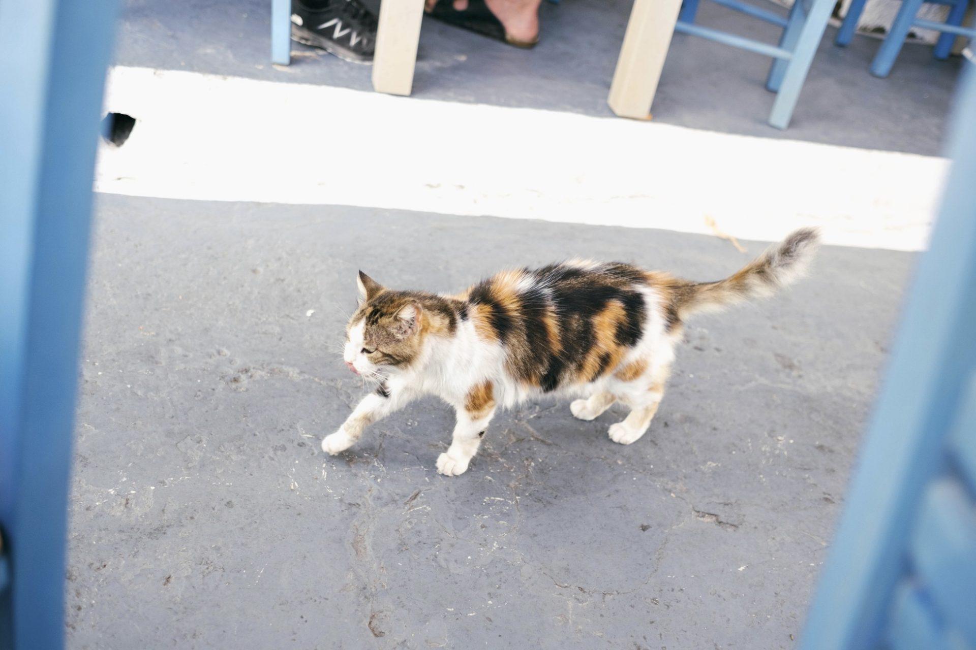 chats grecs@laurentparienti - 15
