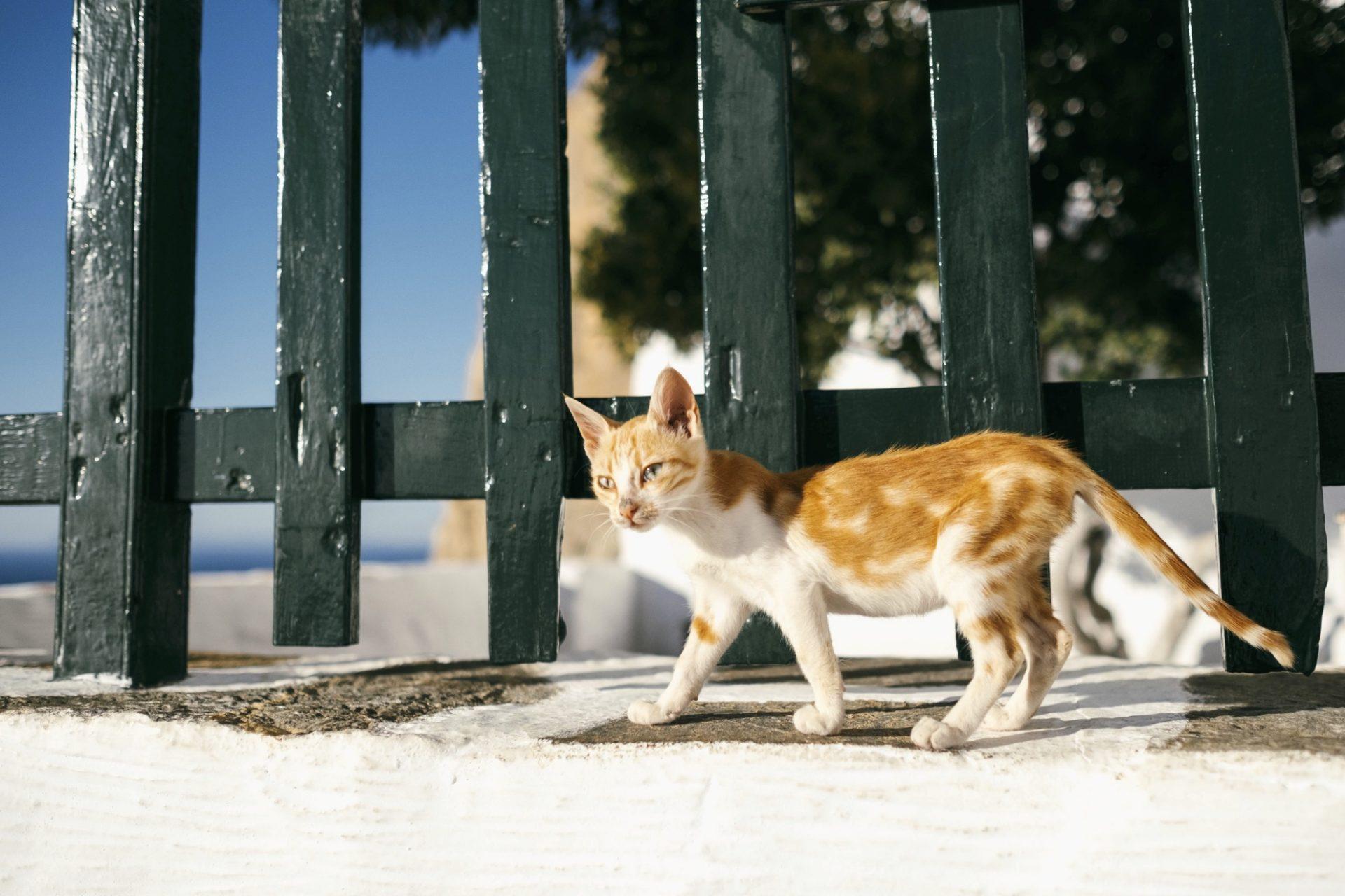chats grecs@laurentparienti - 16