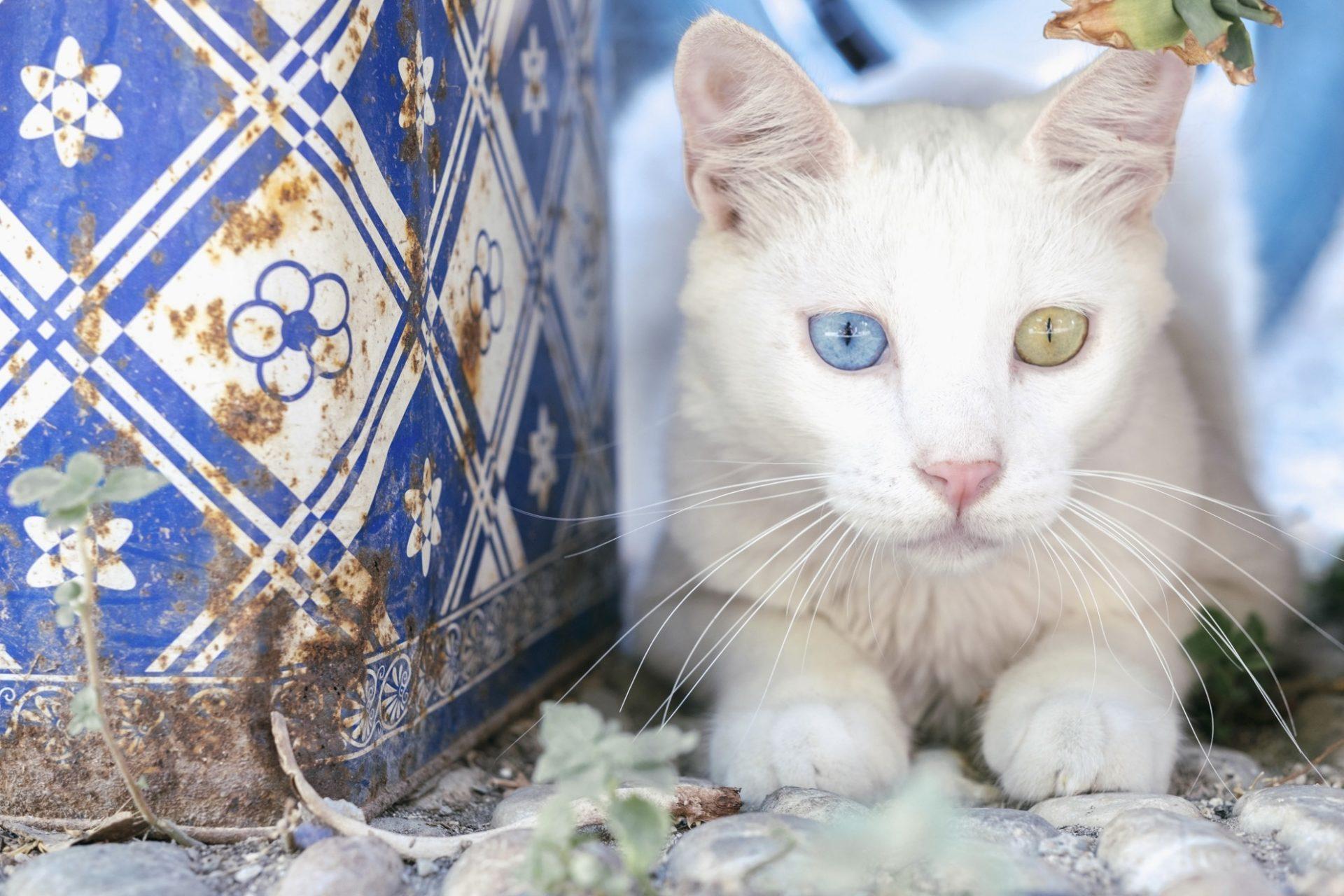 chats grecs@laurentparienti - 4