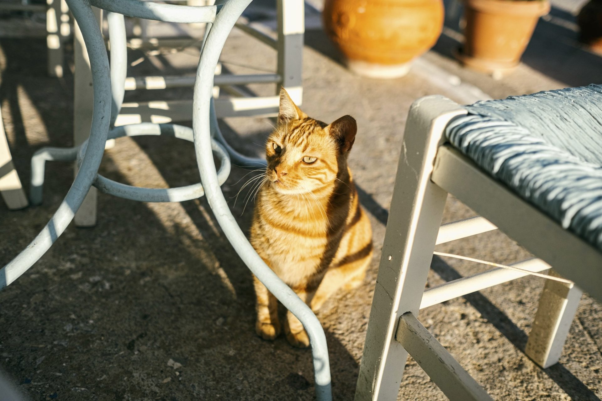 chats grecs@laurentparienti - 11