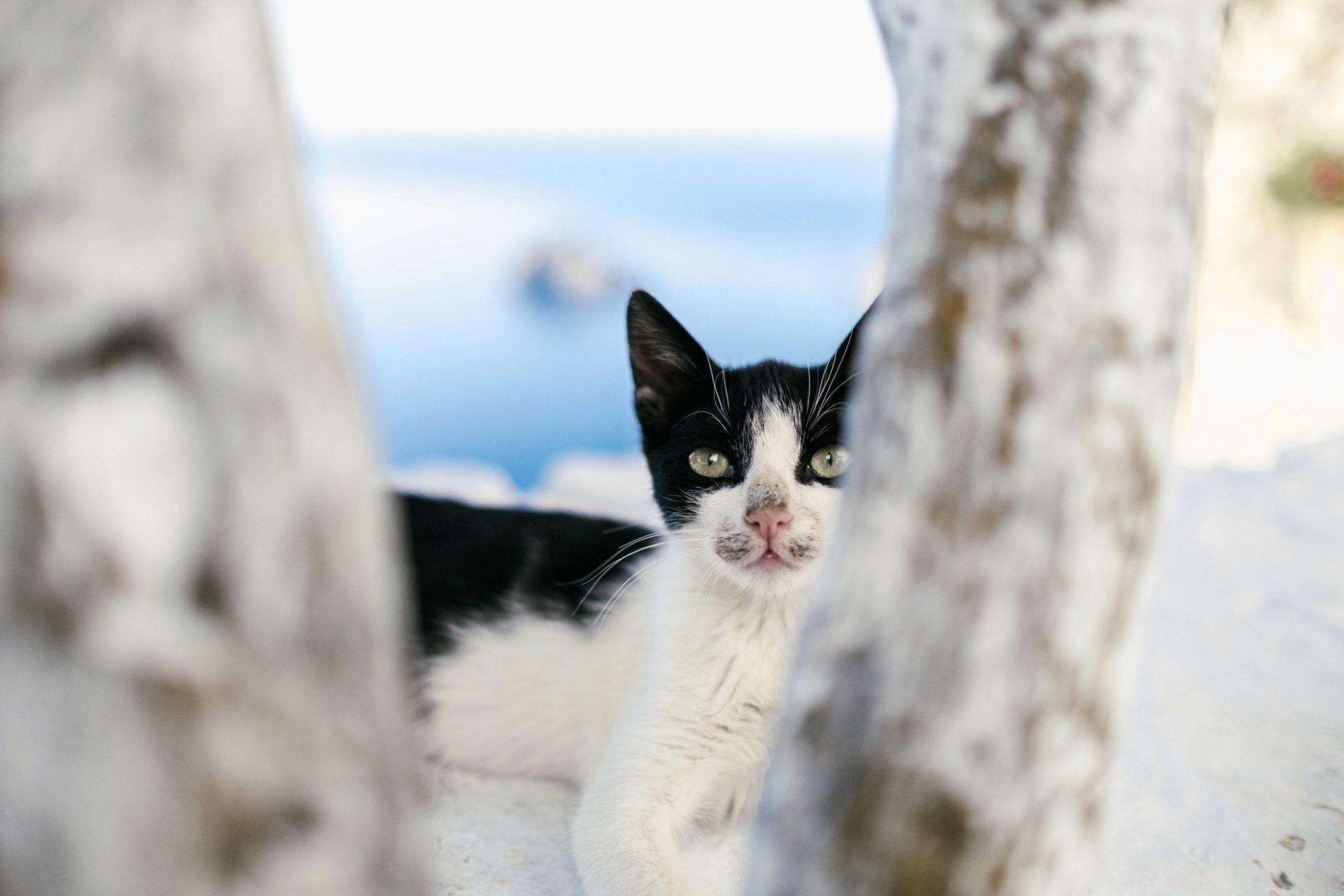 chats grecs@laurentparienti - 13