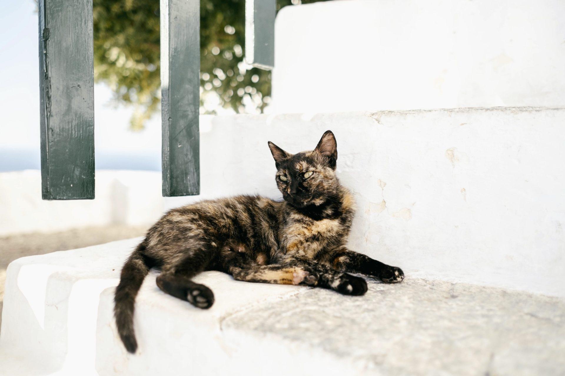 chats grecs@laurentparienti - 14