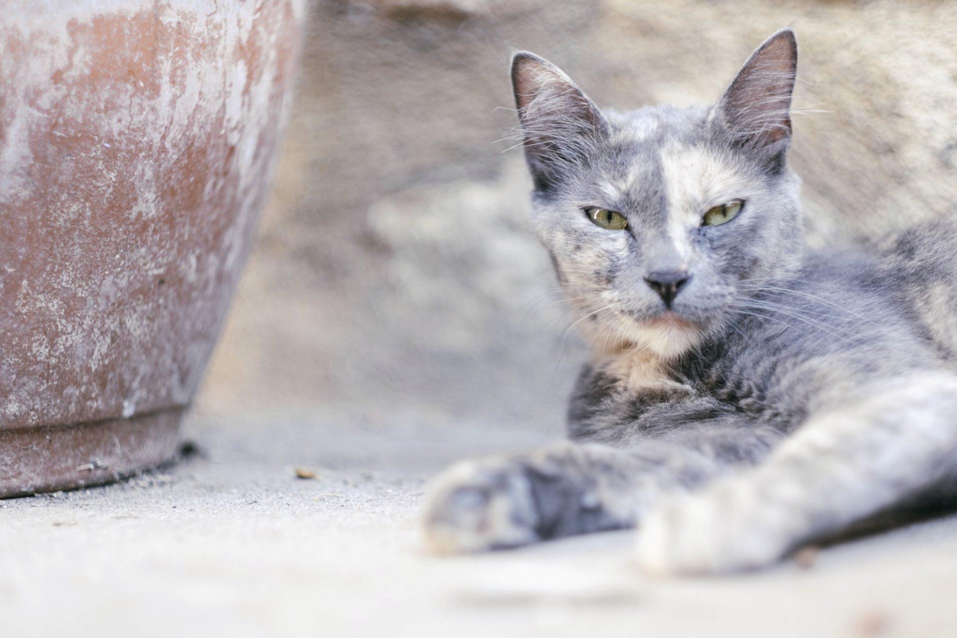 chats grecs@laurentparienti - 3
