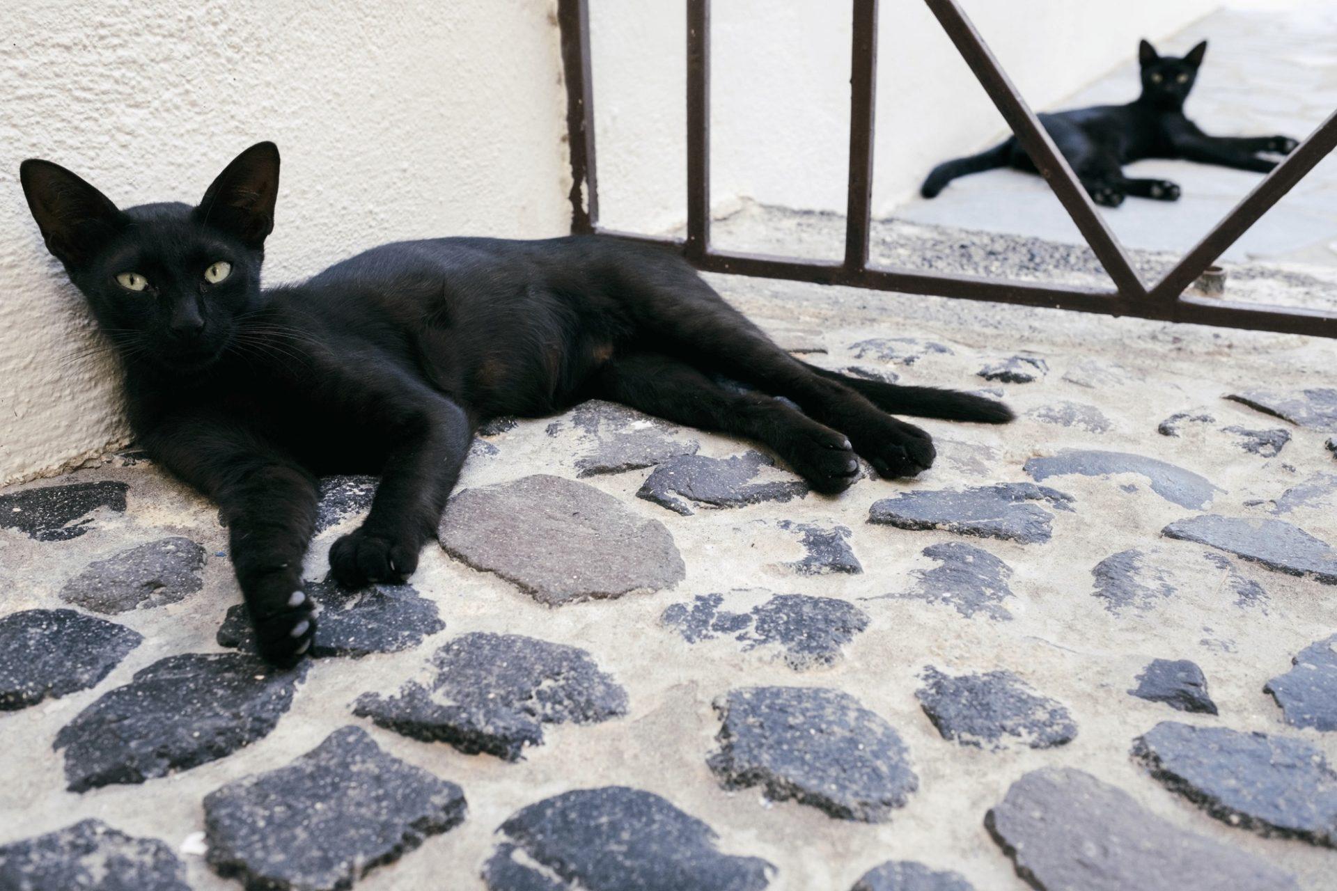 chats grecs@laurentparienti - 6