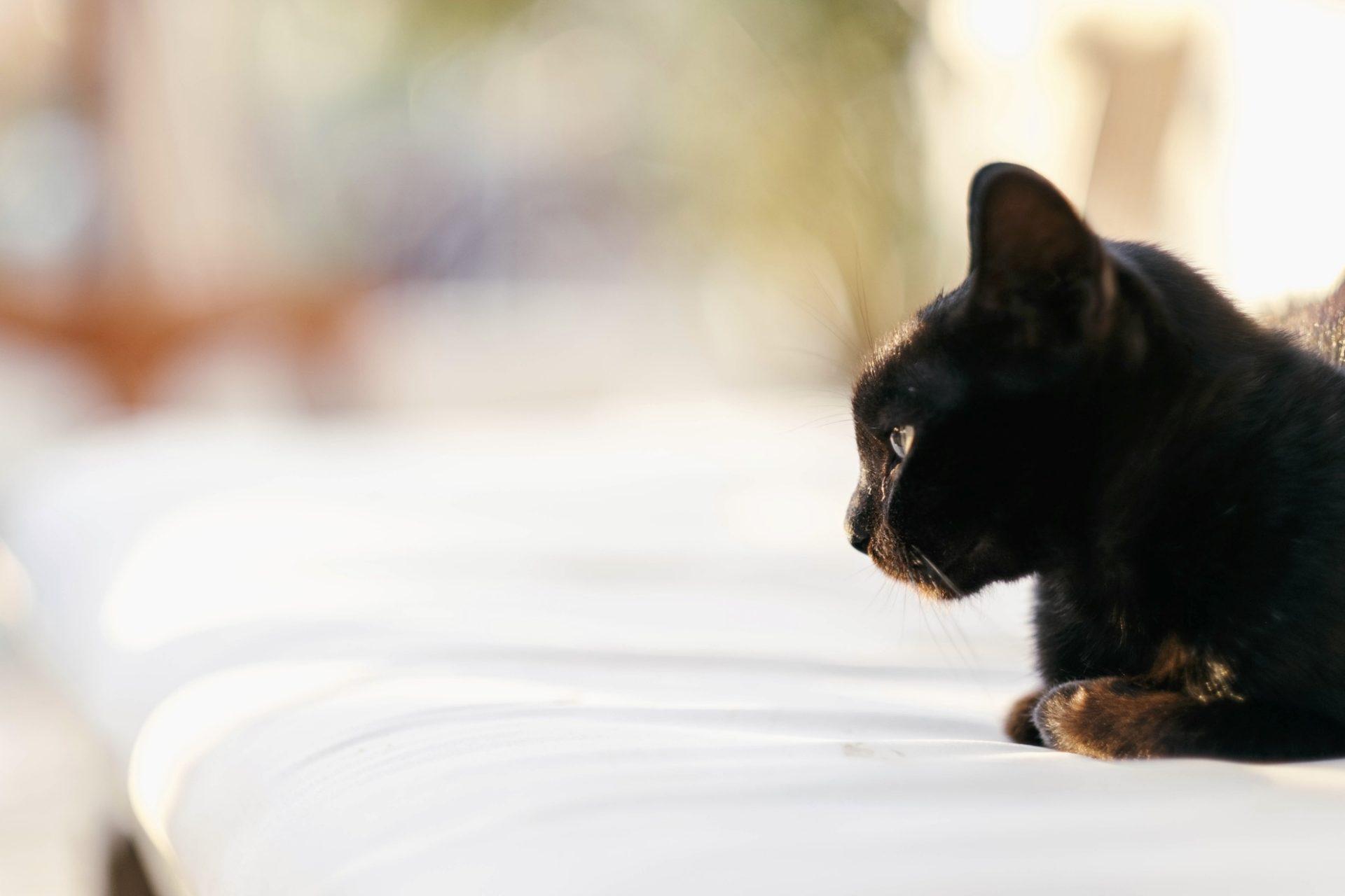 chats grecs@laurentparienti - 9